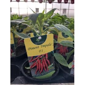 Plants de Piment rouge Impala 1,45€