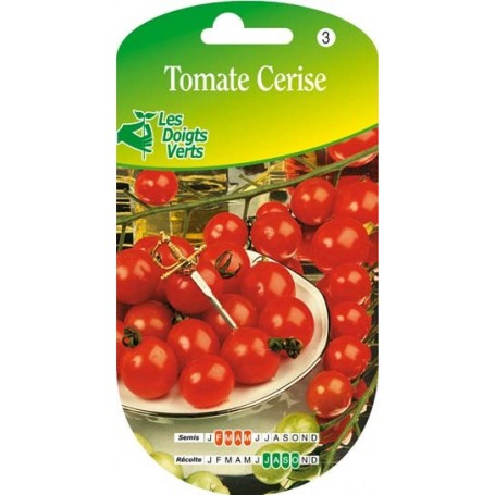 tomate fandango hyb. f1