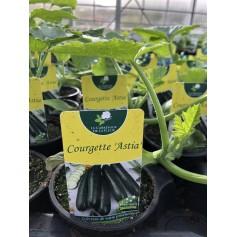 Plants Courgette verte allongée Astia 1.45€