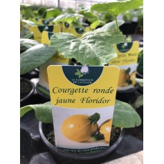 Courgette Jaune Ronde 1.99€