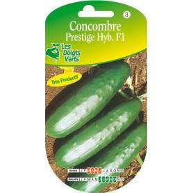 concombre perstige hyb. f1