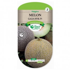 Melon Galia HYB.F1
