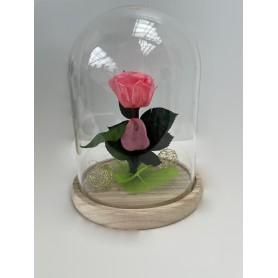 Composition 1 rose éternelle rose dans sa cloche 19,95€