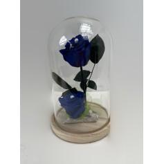 Composition 2 roses éternelle bleu dans sa cloche 29,95€