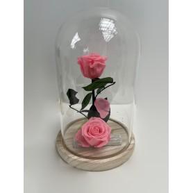 Composition 2 roses éternelle rose dans sa cloche 29,95€