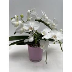 Orchidée blanche avec vase en verre