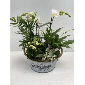 Composition orchidée avec son seau 29,95€