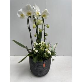 Composition orchidée avec son pot design 29,95€