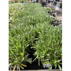 Edelweiss à 2,99€
