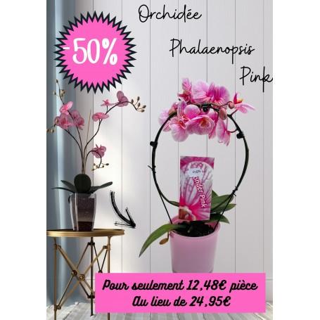 Orchidée rose avec vase en verre