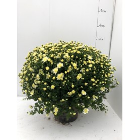 Grosse Pomponettes Unicolore Rose POT50 4.95€ pièce 18€ les 4
