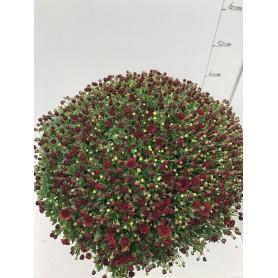 Grosse Pomponettes Unicolore Pourpre POT50 4.95€ pièce 18€ les 4