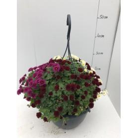 Suspension de Pomponettes Tricolore 7,95€ pièce