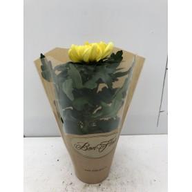 Pot de Chrysanthèmes Traditionnelle 1 tête orange 1.99€